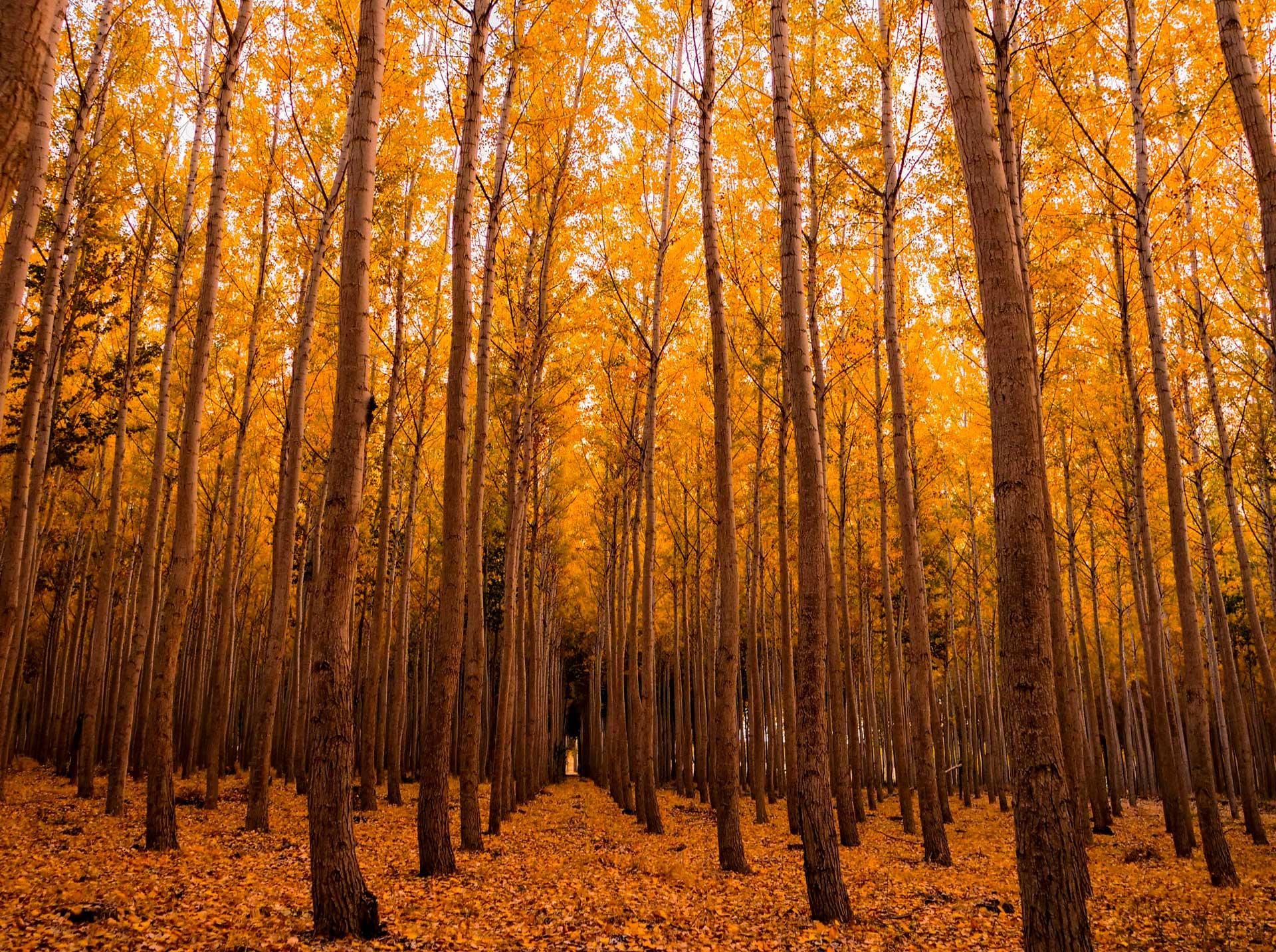 La certificación Forest Stewardship Council, una opción para la moda