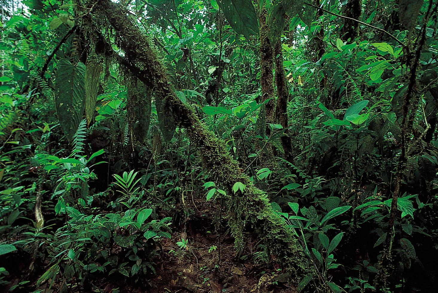 Stella McCartney publica el primer estudio de ACV  sobre el impacto de la moda en los bosques