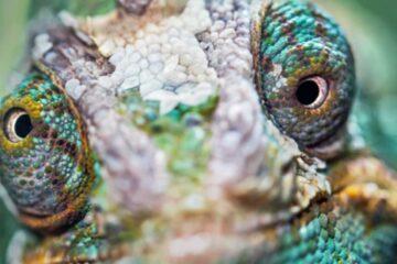 estrategia de biodiversidad empresa moda y textil