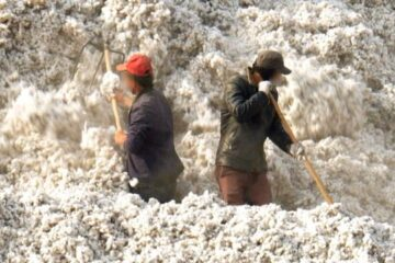 algodón xinjiang